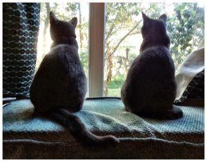 c16-ralph-barrera-2-cats.jpg