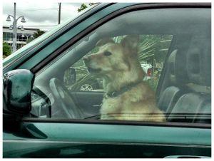 c45-ralph-barrera-dog-driver.jpg