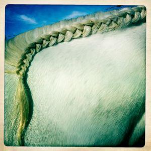 ralph-barrera-horse-braids.jpg
