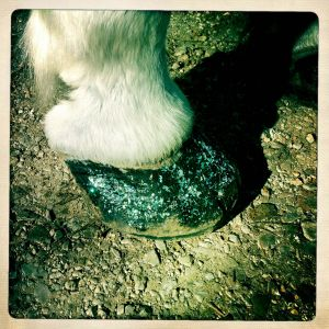 ralph-barrera-horse-hoof.jpg